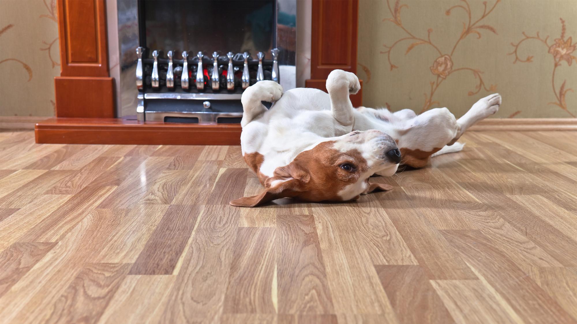S To Fix Squeaky Floors Through Carpet Carpet Vidalondon